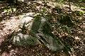 Bois de la Croix Boissée Souzy-la-Briche n2.jpg