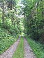 Bois entre le chemin d'Hameau et la rue de Gomerée à Ham-sur-Heure 02.jpg