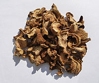 Boletus Impolitus dried 2010 G1.jpg