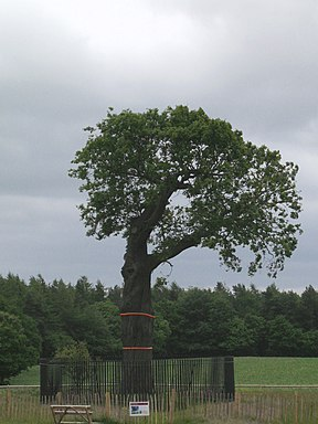 Boscobel - Royal Oak 2011.jpg