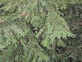 Botanička bašta Jevremovac 017.JPG