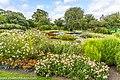 Botanic Gardens In Glasnevin (Dublin) (7951849556).jpg