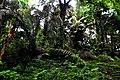 Botanic garden limbe104.jpg