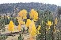 Boulder Mt. Fall - panoramio.jpg