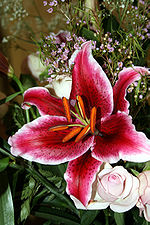 Bouquet (1).jpg