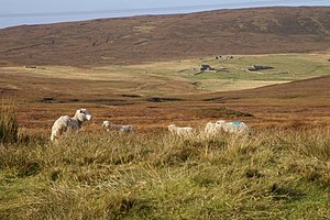 Yell, Shetland - As elsewhere in Shetland, and northern Scotland, depopulation has been a serious problem. This is the former settlement of Bouster, whose name suggests a Norse origin