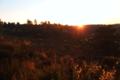 BrachterWald bei Sonnenaufgang04.png