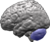Brain-cerebellum.png