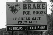 Break for moose sign.png
