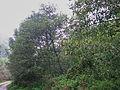 Bresnička reka 6.JPG