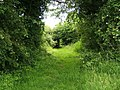 Bridleway out of Reading Green - geograph.org.uk - 472423.jpg