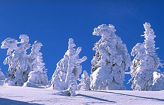 Harzreise im Winter - Trees in the Harz mountains after heavy snow