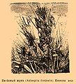 Brockhaus and Efron Encyclopedic Dictionary b73 429-0.jpg