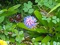 Bubble Flower.jpg