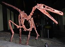 Buitreraptor skeleton1.jpg