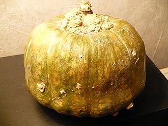 Cucurbita maxima - Image: Buttercupsquash