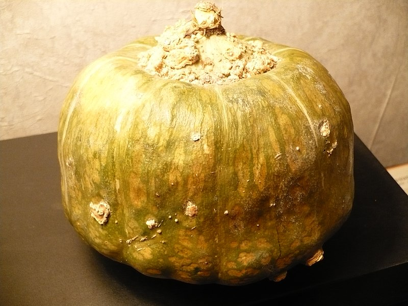 Պատկեր:Buttercupsquash.JPG
