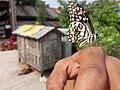 Butterfly20171025 124059.jpg