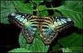 Butterfly (4540773157).jpg