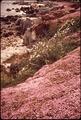 CALIFORNIA-MONTEREY BAY AREA - NARA - 543202.tif