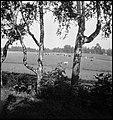 CH-NB - Finnland- Landschaft - Annemarie Schwarzenbach - SLA-Schwarzenbach-A-5-17-078.jpg
