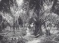 COLLECTIE TROPENMUSEUM Het kappen van palmbladeren op onderneming Nijkerk TMnr 60039511.jpg