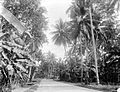 COLLECTIE TROPENMUSEUM Palmen en bananenbomen langs de grote weg tussen Belawan en Medan Noord-Sumatra TMnr 10007635.jpg