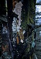 CSIRO ScienceImage 1420 Tree trunk.jpg