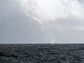 CSIRO ScienceImage 7783 A waterspout over the Tasman Sea.jpg