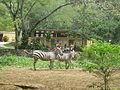 Cali Zoo 28-02-14 17.JPG