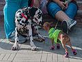 Caminata por los perros y animales Maracaibo 2012 (14).jpg