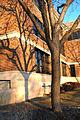 Campus tree callie fugina.jpg
