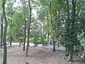 Caramoor - woods.jpg