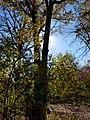 Cardiff Woods Park (32309072640).jpg