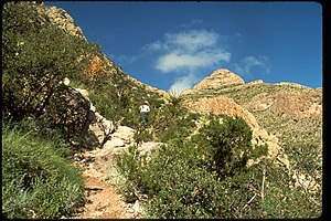Carlsbad Caverns National Park CAVE4308.jpg
