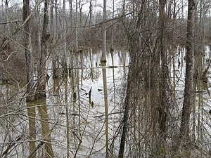 Carroll County, Mississippi - Swamp in Carroll County in winter