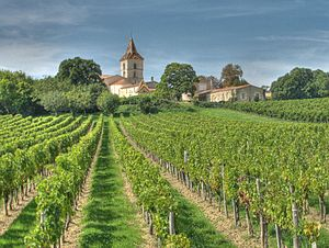 Bordeaux wine - Vineyards of the Bordeaux wine region of Blaye