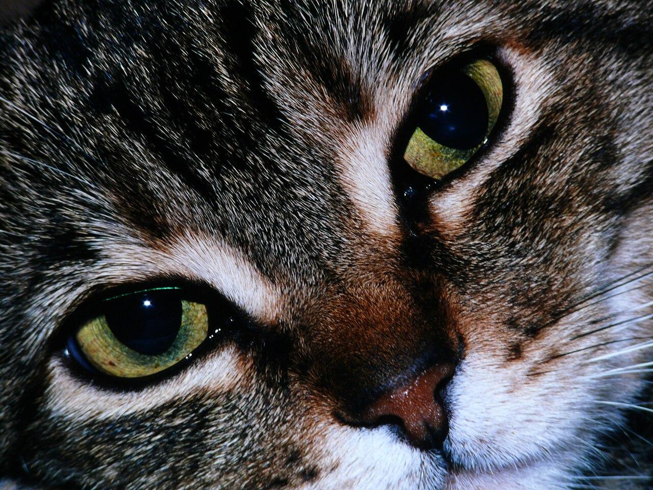 Cat S Eyes En Vrai