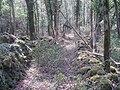Cattle lanes, parc national des Ecrins.jpg