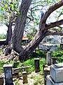 Cementerio Viejo de Camuy, Puerto Rico - panoramio (4).jpg
