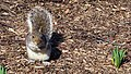 Central Park - Content Squirrel 2 (New York) (45240407081).jpg