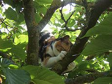 230px-Chatte-arbre5