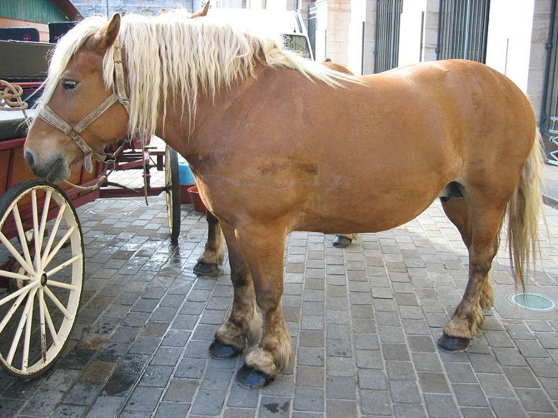 horse, mcdonald's, woman, horse mcdonald's