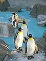 Chiba zoo animal2.jpg