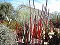Chihuly in the Desert Botanical Garden - panoramio (9).jpg