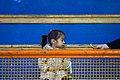 Children of Iran Of qom کودکان ایرانی، کودکان قمی 21.jpg