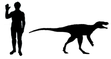 Chindesaurus scale.png