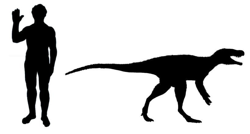 Chindesaurus scale