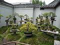 Chinesegardensidney1.jpg