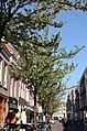 Choorstraat Delft 2018 1.jpg